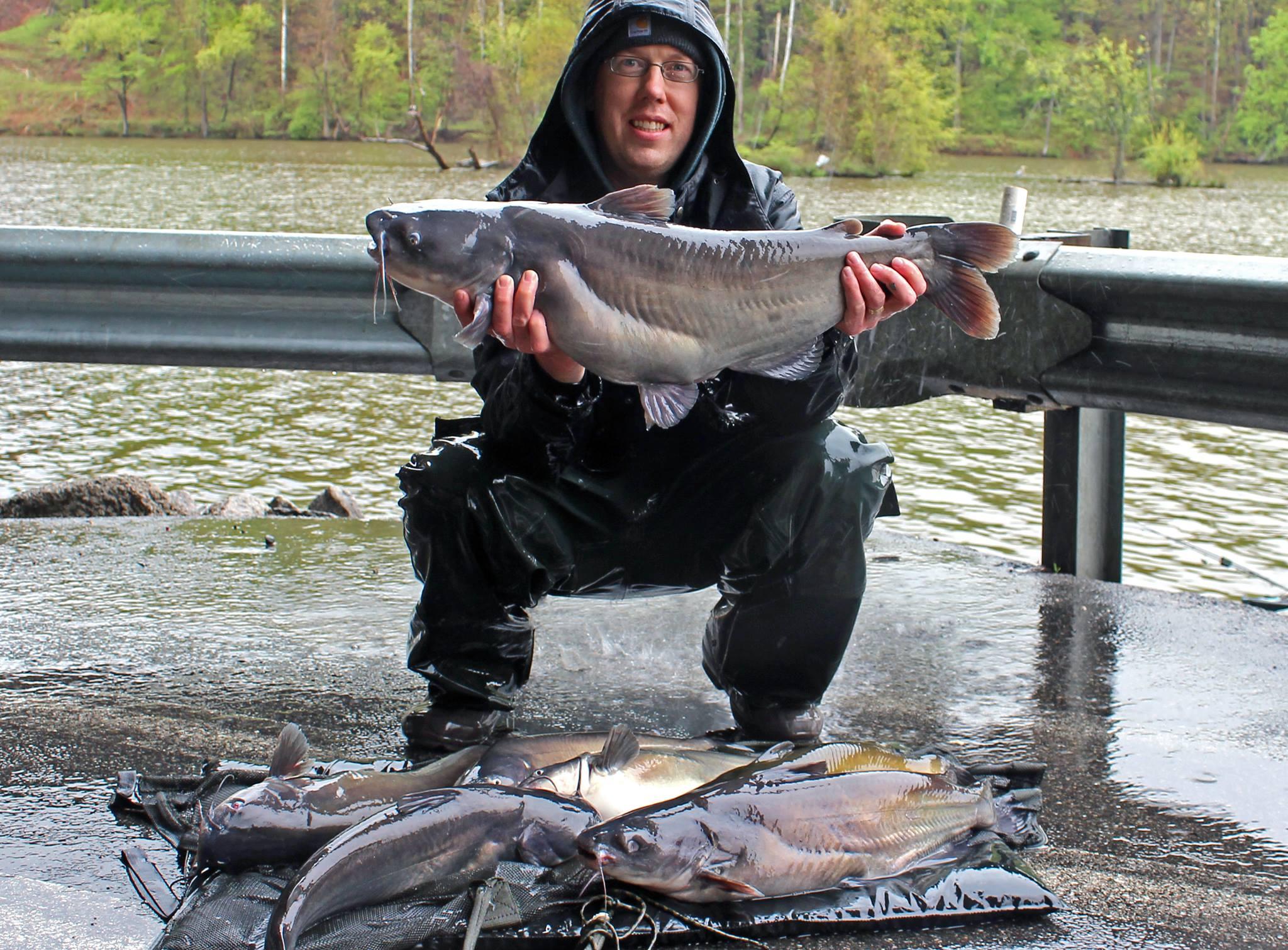 20 lb blue catfish